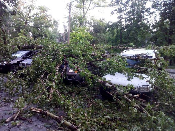 Поваленные деревья на машинах