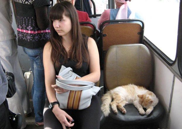 Кот в автобусе