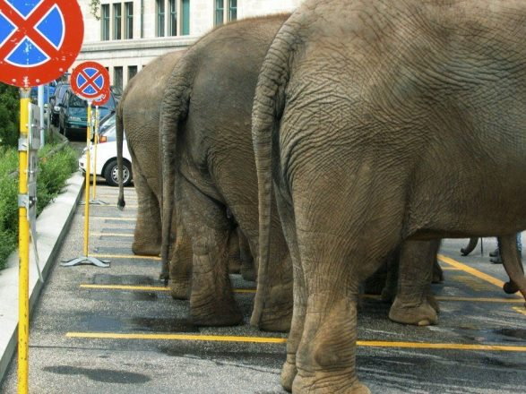 Слон на парковке