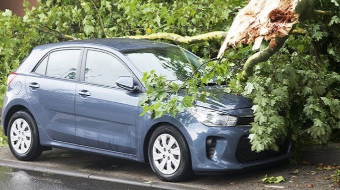 Упавшее дерево на машину