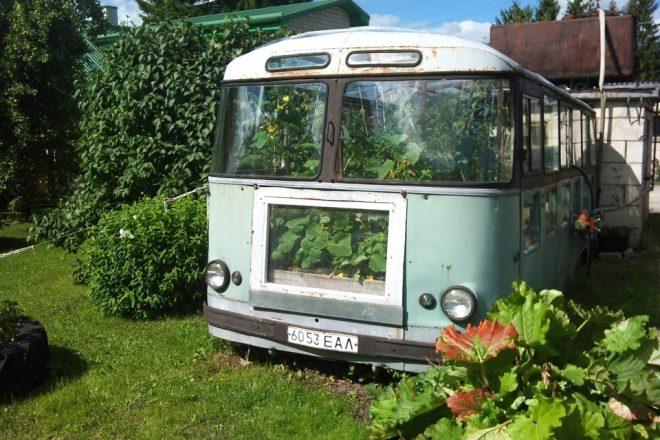 Теплица в старом автобусе