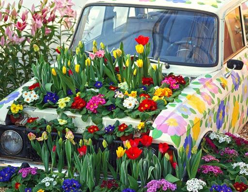 Тюльпаны растущие в автомобиле