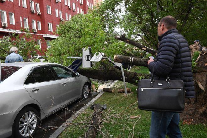 Упавшее на автомобиль дерево