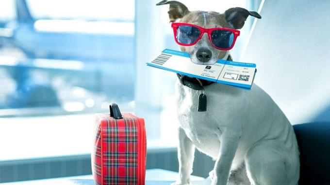 Собака в очках и с билетом