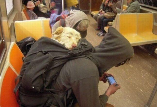 Собака в рюкзаке едет в метро